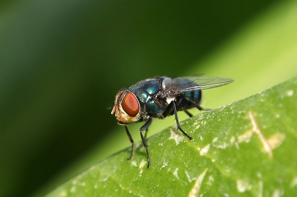 Un-identified flies