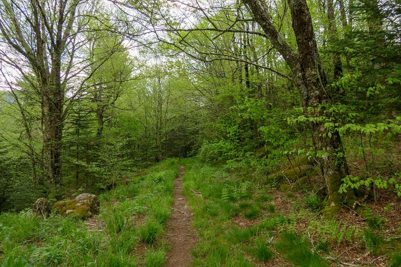 Mountains-to-Sea Trail -- 5,150'