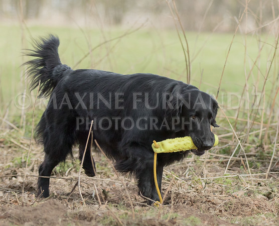 GUNDOG TRAINING 2018