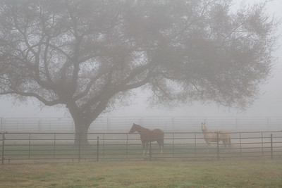 Oakdale Fog