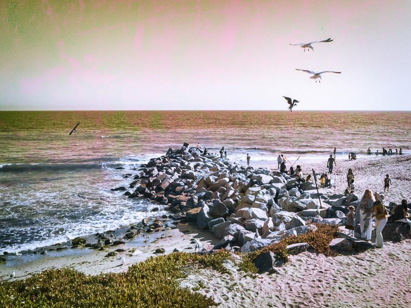 aug 5 - seagulls.jpg