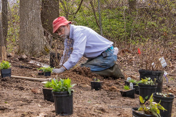Planting Pollinator Garden 4/19