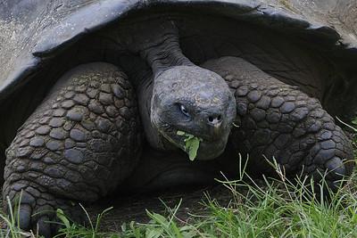 Galapagos Islands 5/22/2011