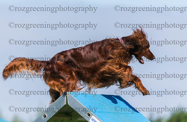 Bromsgrove DTC Sunday Ring 3 Large Agility 1-4 Combined