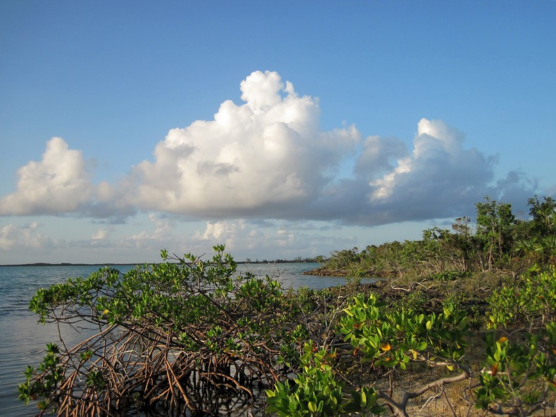 The mangrovey west side of the cay