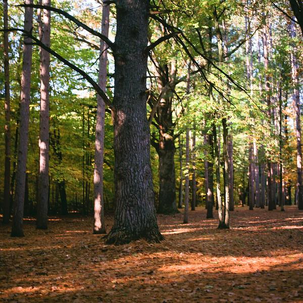 Autumn Hike 120 Film-00059.jpg