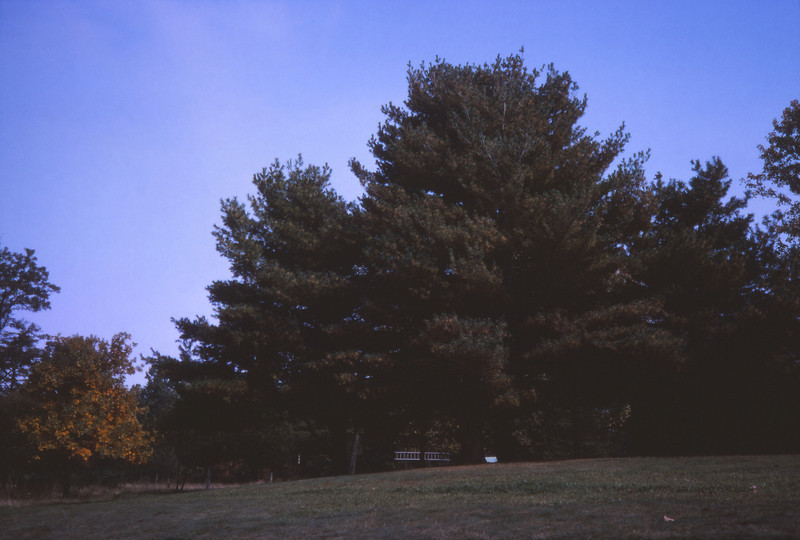 Fall 1984 - 009.jpg