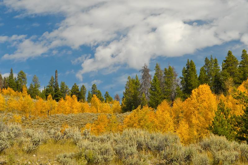 "Grand Teton National Park near the ""oxbow""."
