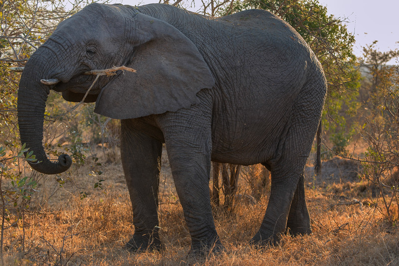 2014-08Aug-Thornybush Masters-4-Edit.jpg