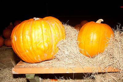 Pumpkin Patch - Halloween 2011