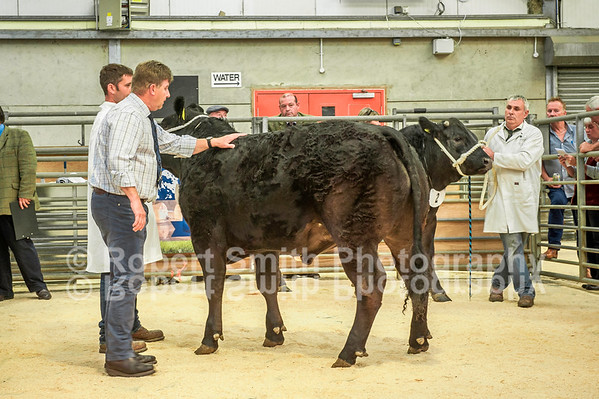 Hexham Mart Anniversary Show August 13th 2015