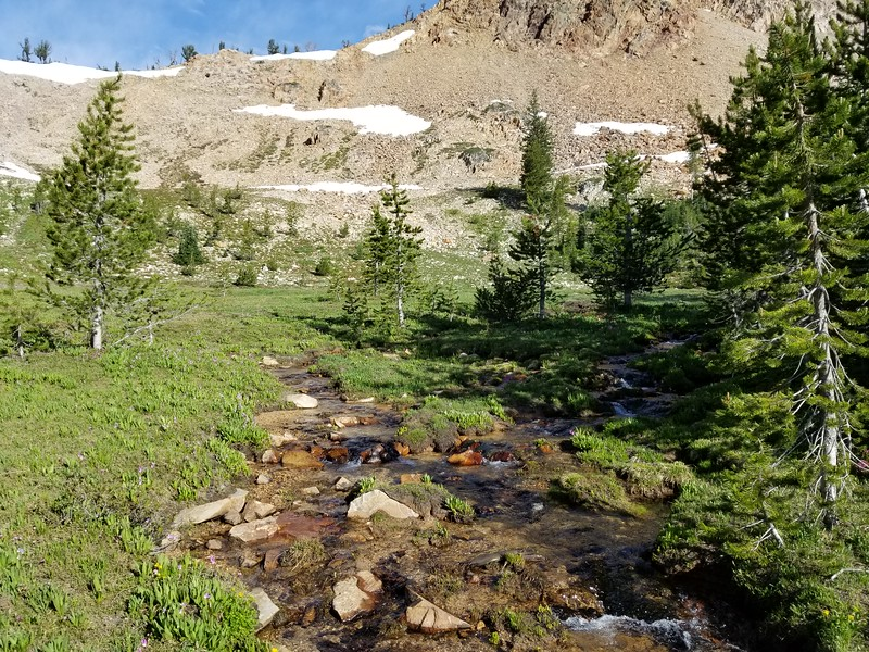 Meadow at the Imogene Lake trail junction