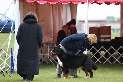 Sweeps 12-15mo Puppy Bitch BMDCA 2010
