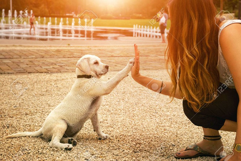 62434938-handshake-between-woman-and-dog-high-five-teamwork-between-girl-dog.jpg