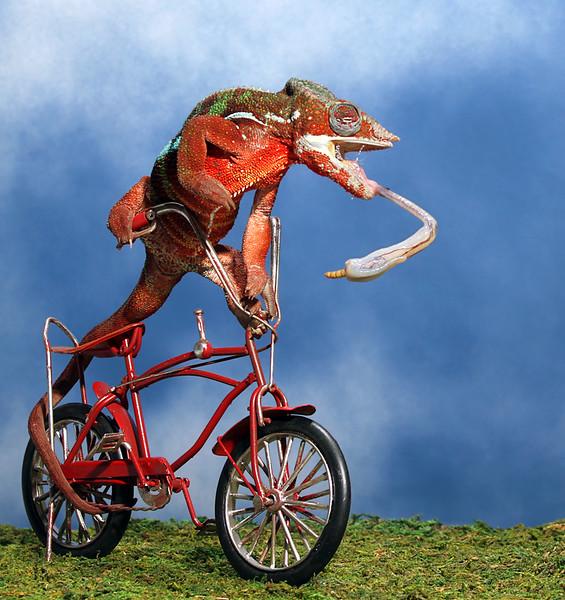 Extreme Bike Riding.jpg