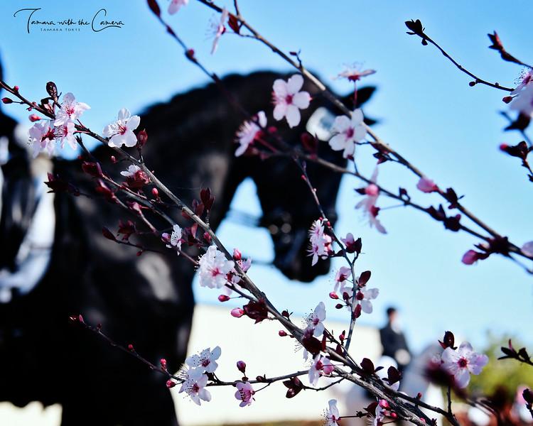 GSD 19 Blossoms 970.jpg