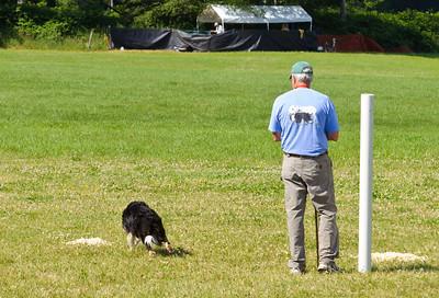 Sheep Dog Trials 2011
