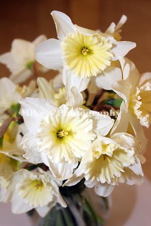 White Hall Herb & Garden Club Daffodil Show