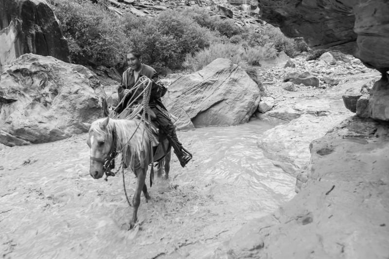 Horses_2013_002.jpg