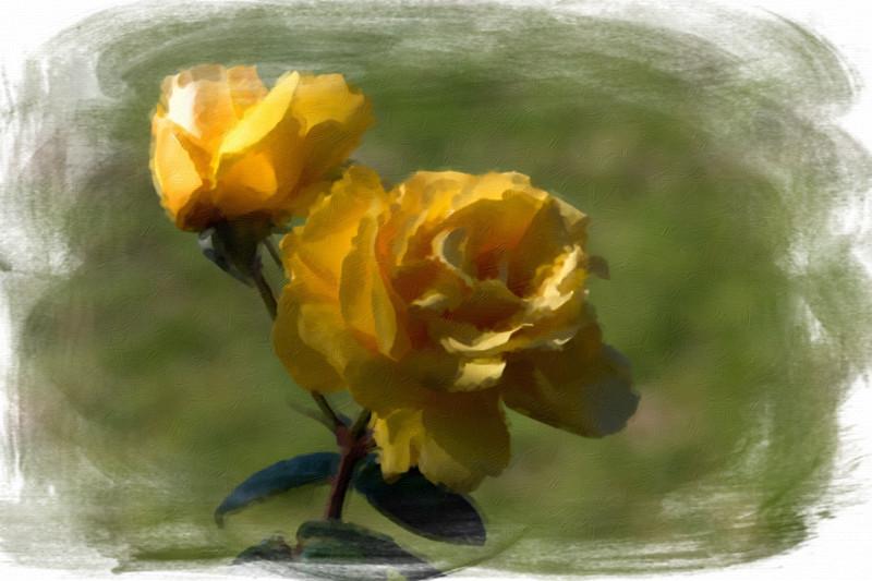 April 25 - Yellow rose.jpg