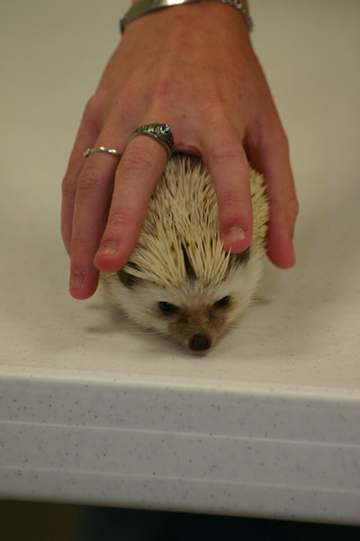 Southern Missouri Hedgehog Show 2004  Southern Missouri Hedgehog Show 2004  Filename reference: 20040612-140903-HAH-SMHC_2004-SM