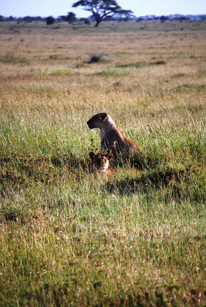 Serengeti (119).JPG