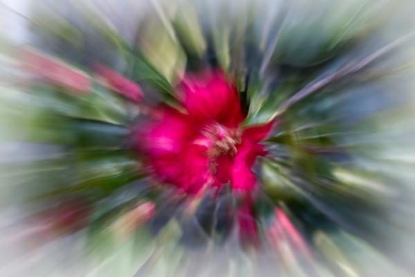 February 12 - Floral burst.jpg