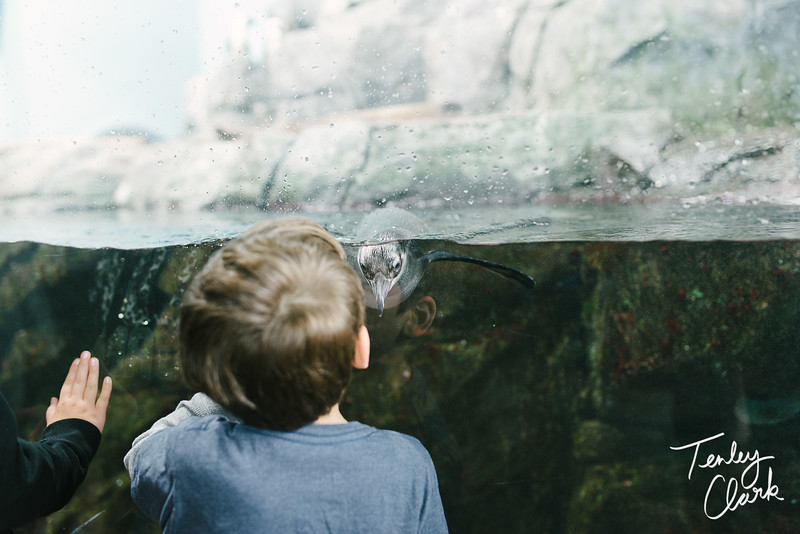 Monterey Bay Aquarium. Family trip/vacation to Monterey, CA. (Tenley Clark Photography)
