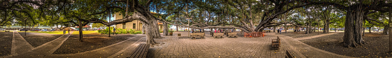 Back in Lahaina, this is the famous Banyan Tree.  It's one single tree that takes up an entire block with many growths.