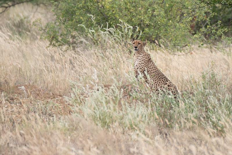 Jay Waltmunson Photography - Kenya 2019 - 195 - (DSCF5660).jpg