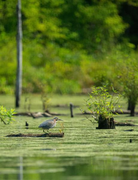 Monksville Reservoir Kayaking (152 of 206).jpg