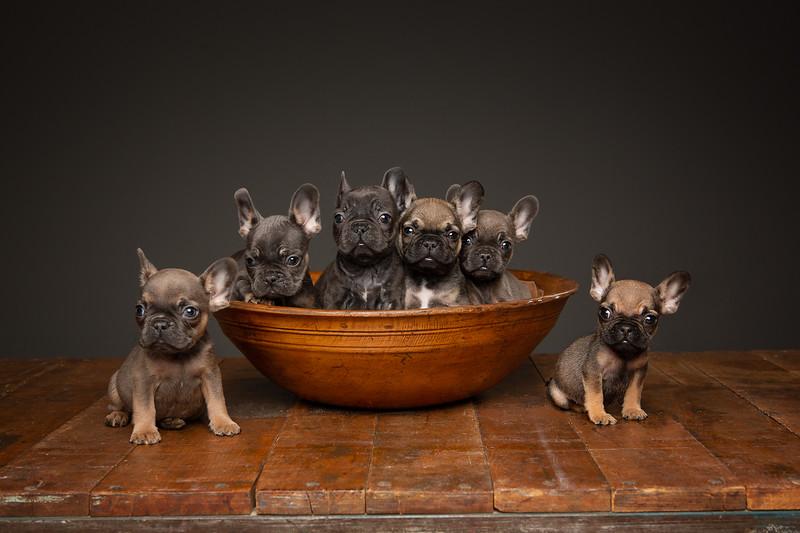 Pups-392-Edit.jpg