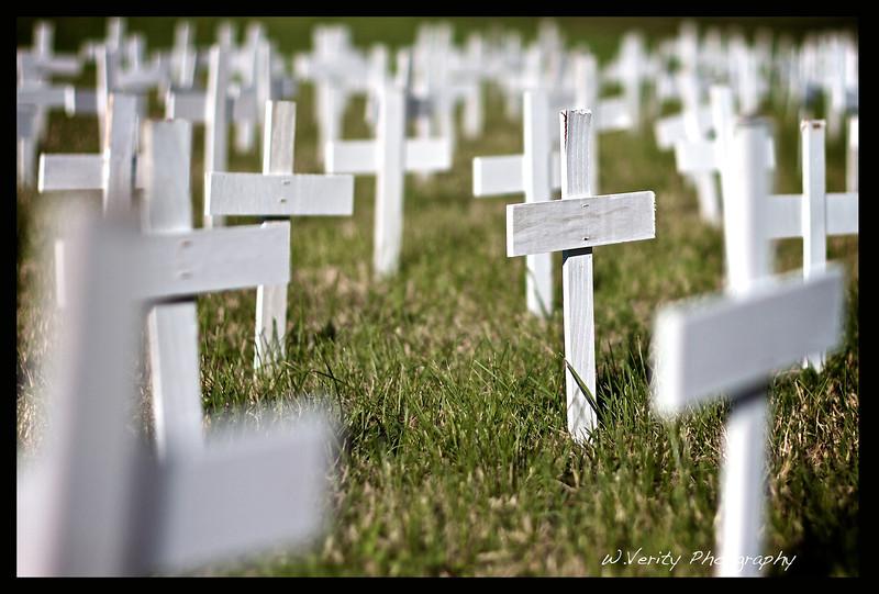 240 White Crosses.jpg