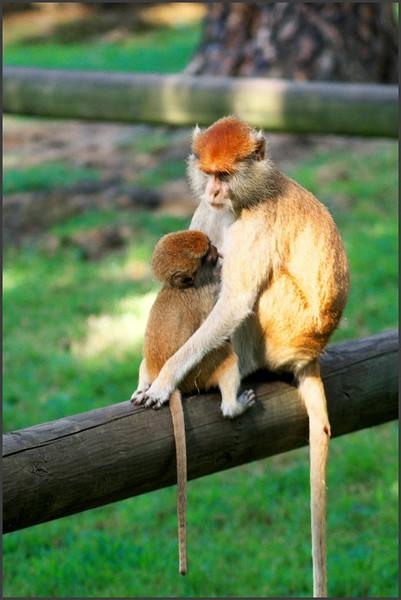 Zamyšlená matka s potomkem