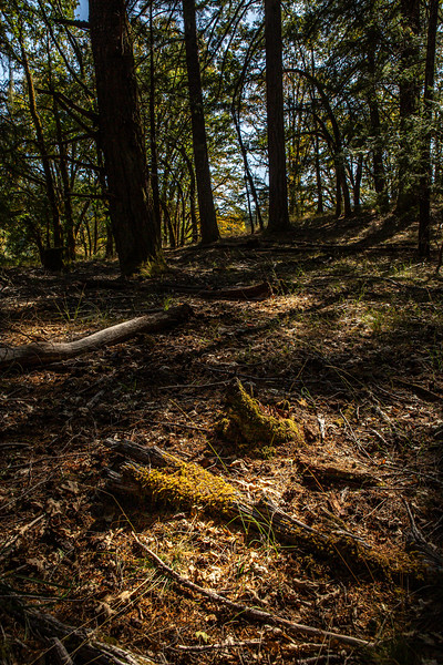 Deep Woods #3