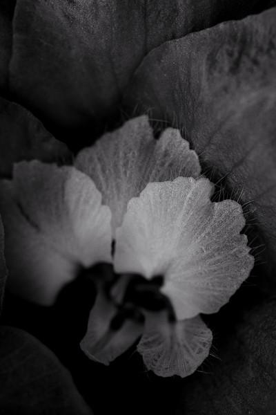flower mind-2-2.jpg