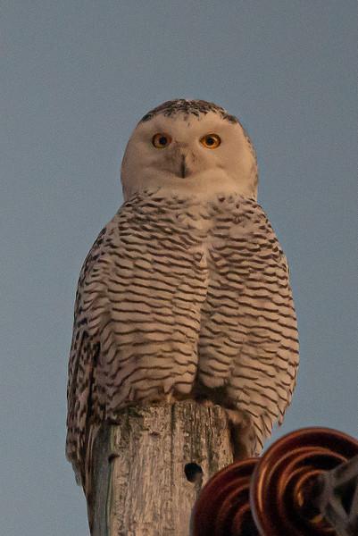 owls-101.jpg