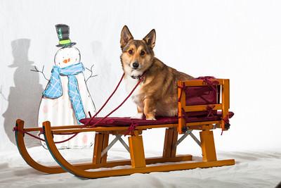 Blitz goes sledding
