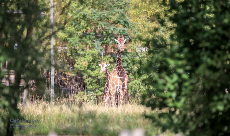 2016-07-17 Fort Wayne Zoo 209LR.jpg