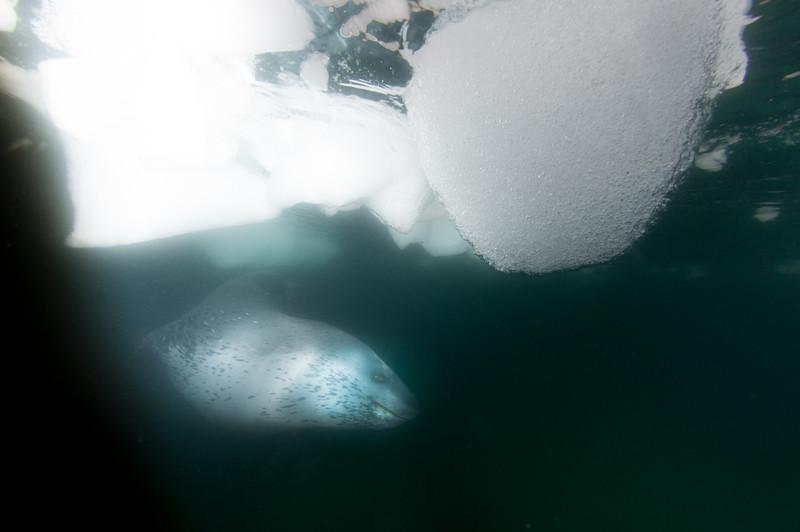 Antarctica 2015 (20 of 99).jpg