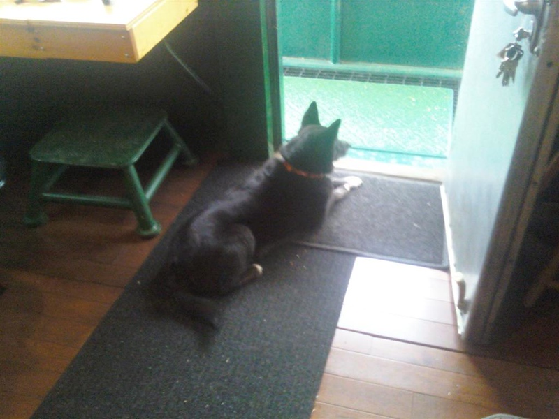 Guarding the front door of caboose 51  Spring 2011