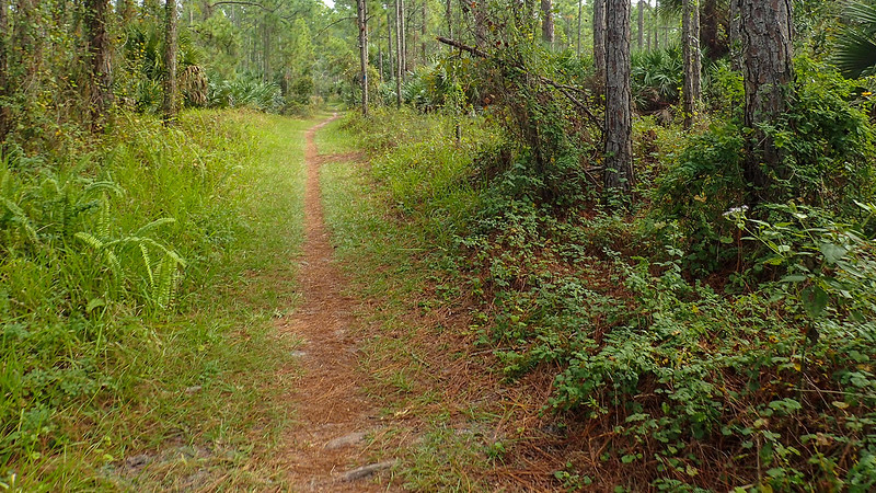 Halpatiokee Mountain Bike Trail