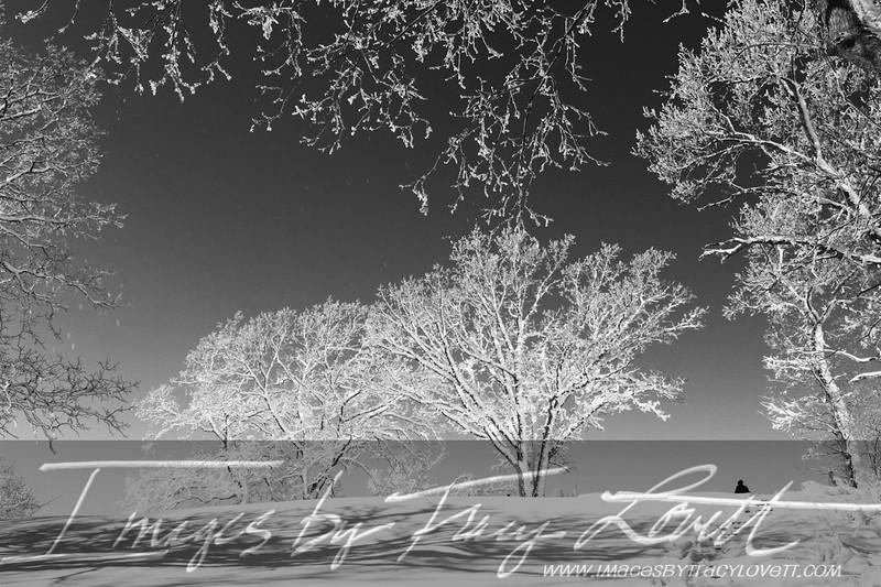 snow_3300 copy2.jpg