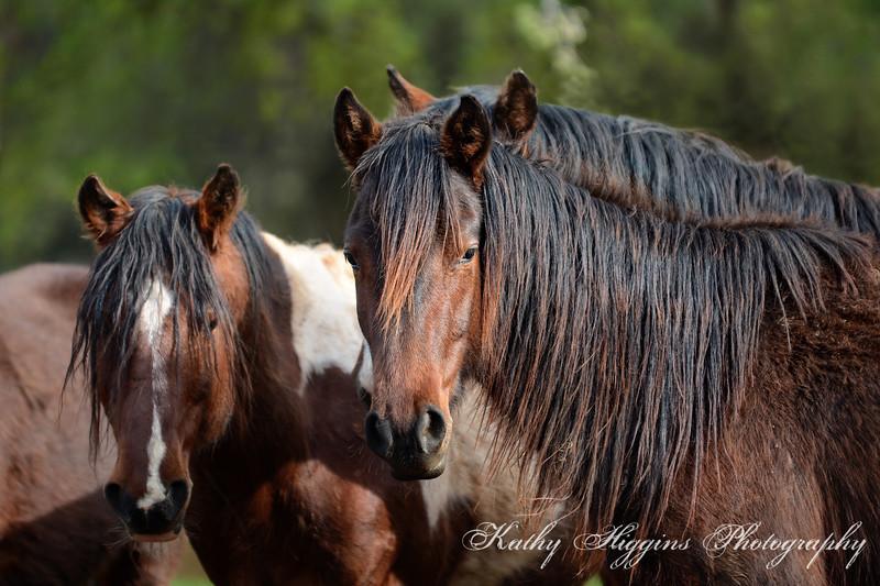 Wild Horse Sactuary 2017