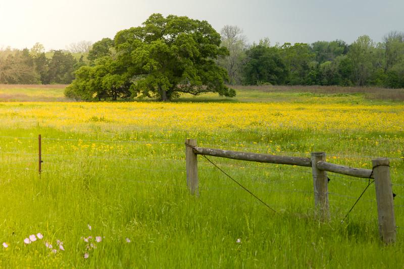 2015_4_3 Texas Wildflowers-7564.jpg