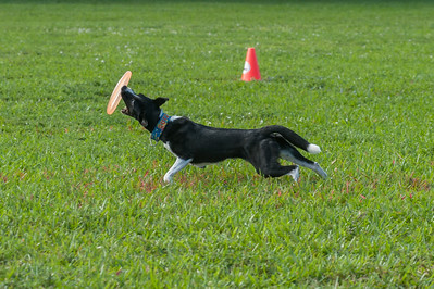 Fragility-with Performance Pups -Up Dog  Inc-http://www.performancepupsinc.com