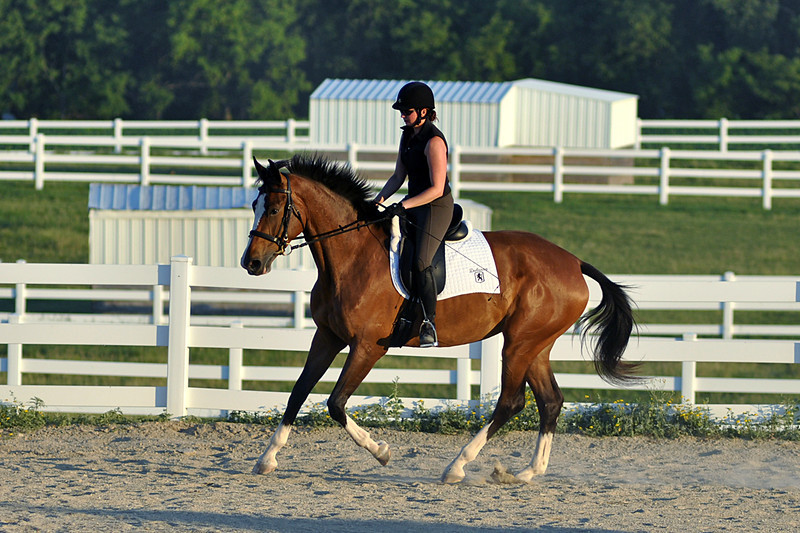 Horses July 2011 576a.jpg