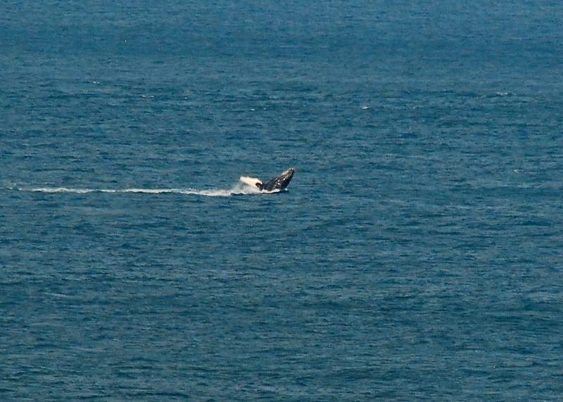 ALT_2277-adj-Whale.jpg