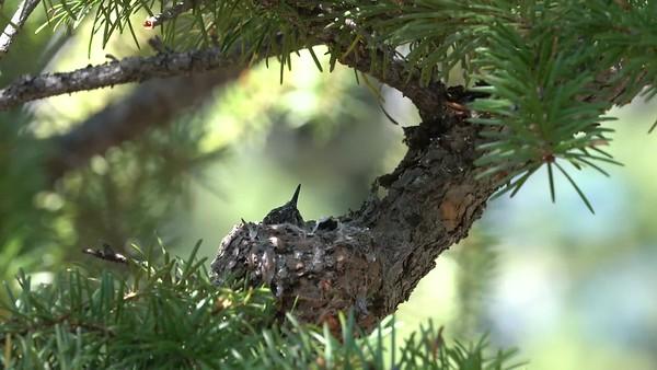 Hummingbird Portfolio