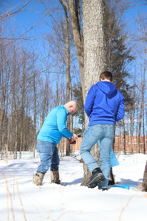 Maple Sap Tapping